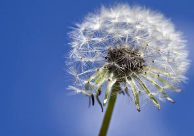 Pollenvrij en stil ventileren tijdens het hooikoortsseizoen